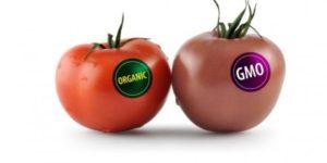 organic-vs-gmo1-e1449641223996